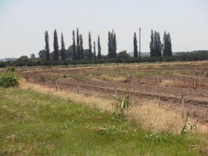 Windsor produce farming