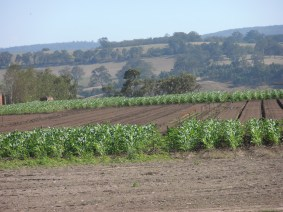 Farming - Lindenow