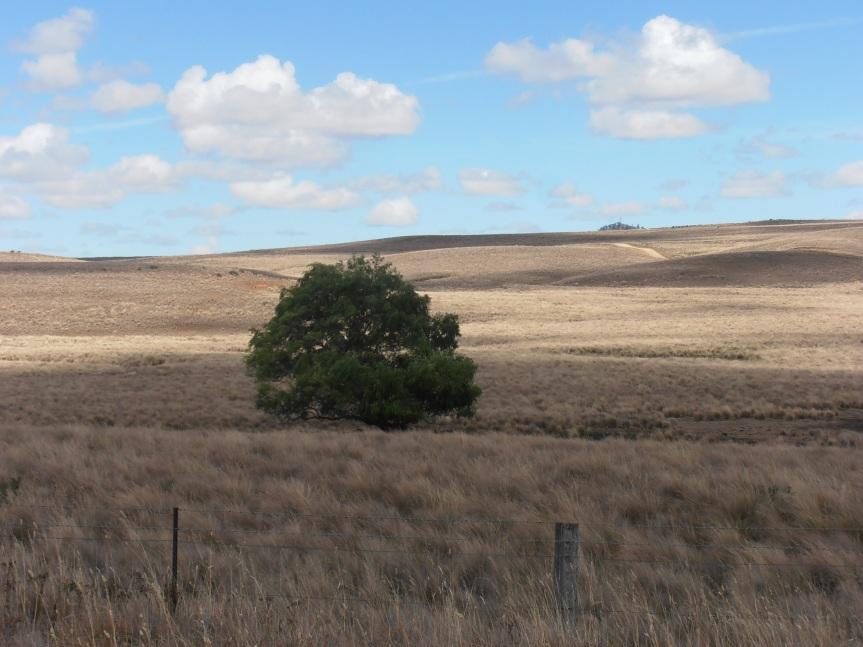 Monaro Farmland