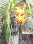 Byfield Rainforest Retreat